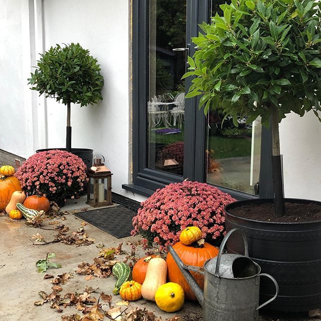 What's this? A beautiful #autumnal scene... anyone would think that all is calm here and definitely not the middle of a building site! My builders thought I was losing the plot today 😂😂.... insta made me do it!!! As today's challenge for day 3 of @storyofmyhome is ~ G o u r d  A l m i g h t y ~ . . . . . . . . #gourd #pumpkin #pumpkinpatch #pumpkindisplay #gourdsgalore #gourdsofinstagram #gourdsongourds #pumpkinseason #pumpkinsunited #pumpkinlove #postitandsmile #fall #autumnvibes #thatsdarling #hashtagchallenge #falldecor #renovation #myhome #homesweethome #pumpkindecor #storyofmyhome #homesweethome #howyouhome #thesimpleeveryday #crashbangcolour #stopandstaredecor #renovationlife #rockmystylishhome