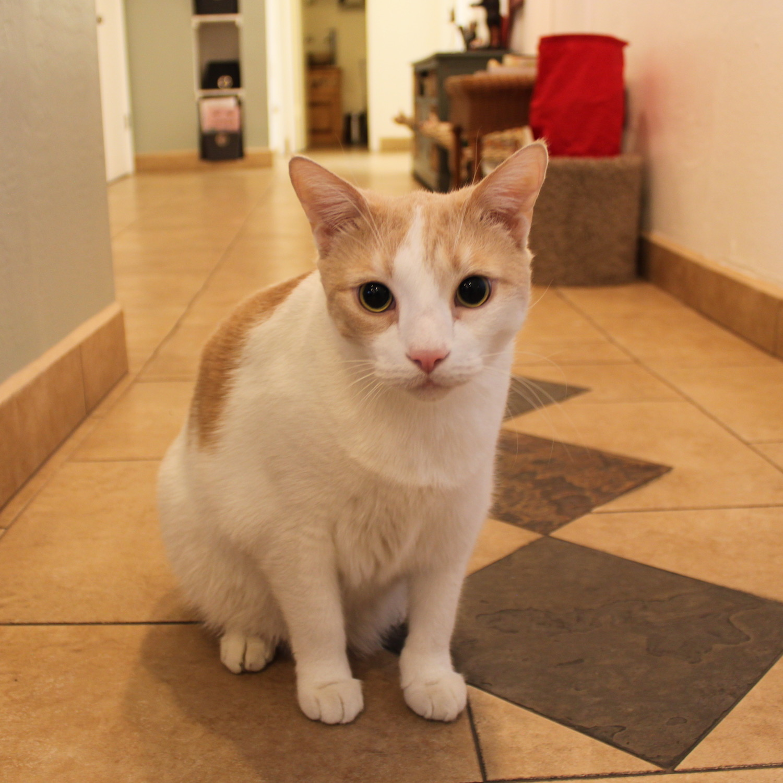 Charlie - Staff Cat