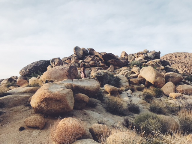 joshua tree really is the most majectic place in the world. i have never seen anything quite like this. it was so peaceful and just god damn beautiful. we cant wait to go back