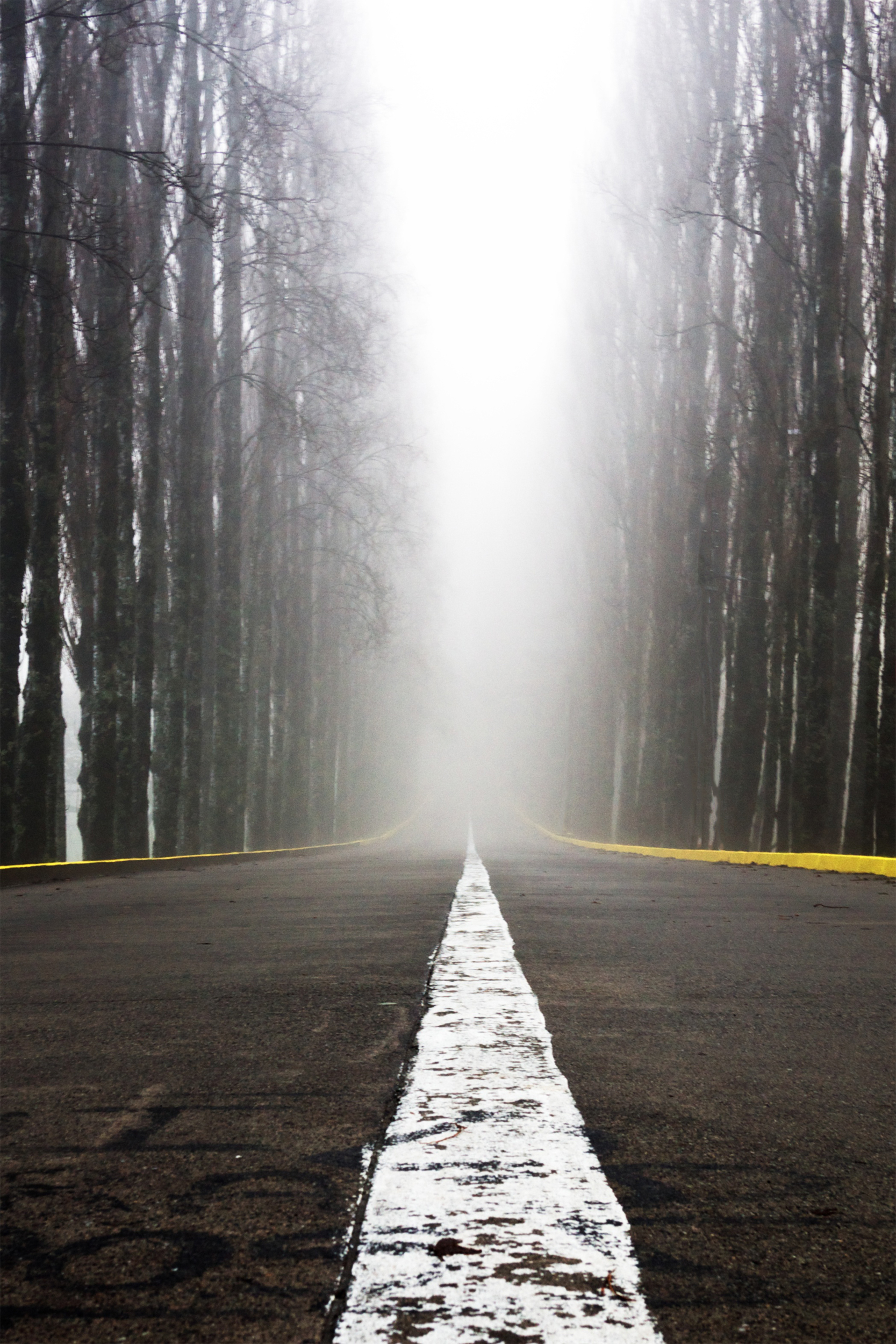 The Road to Austral University, Valdivia