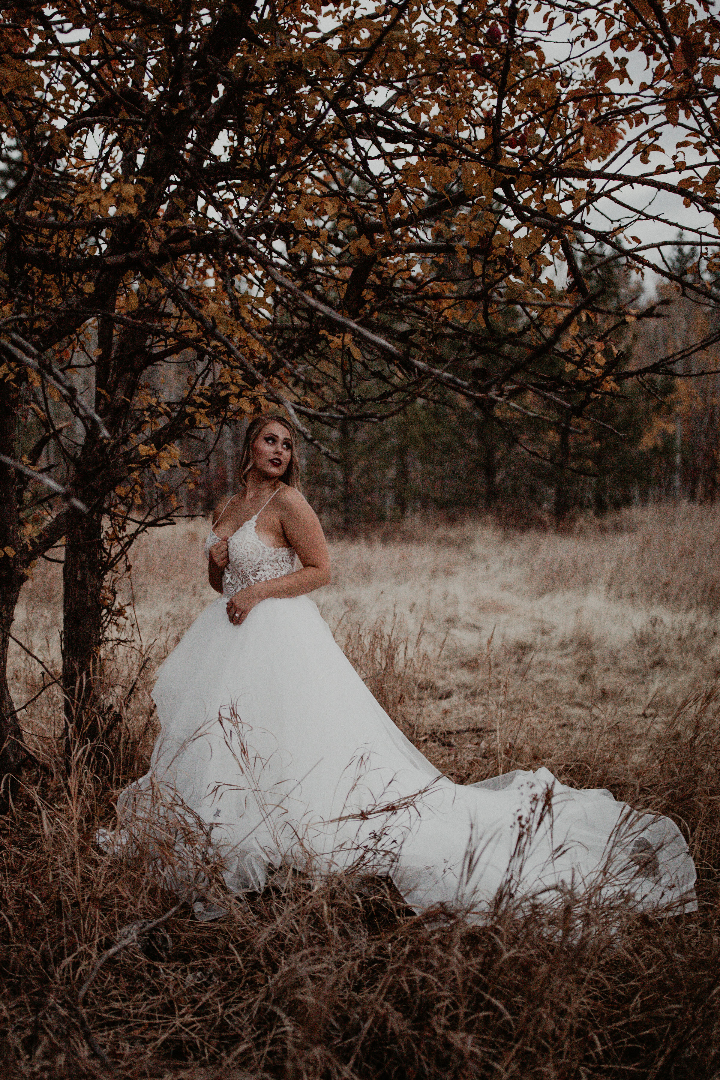 bridal gown under tree spokane image
