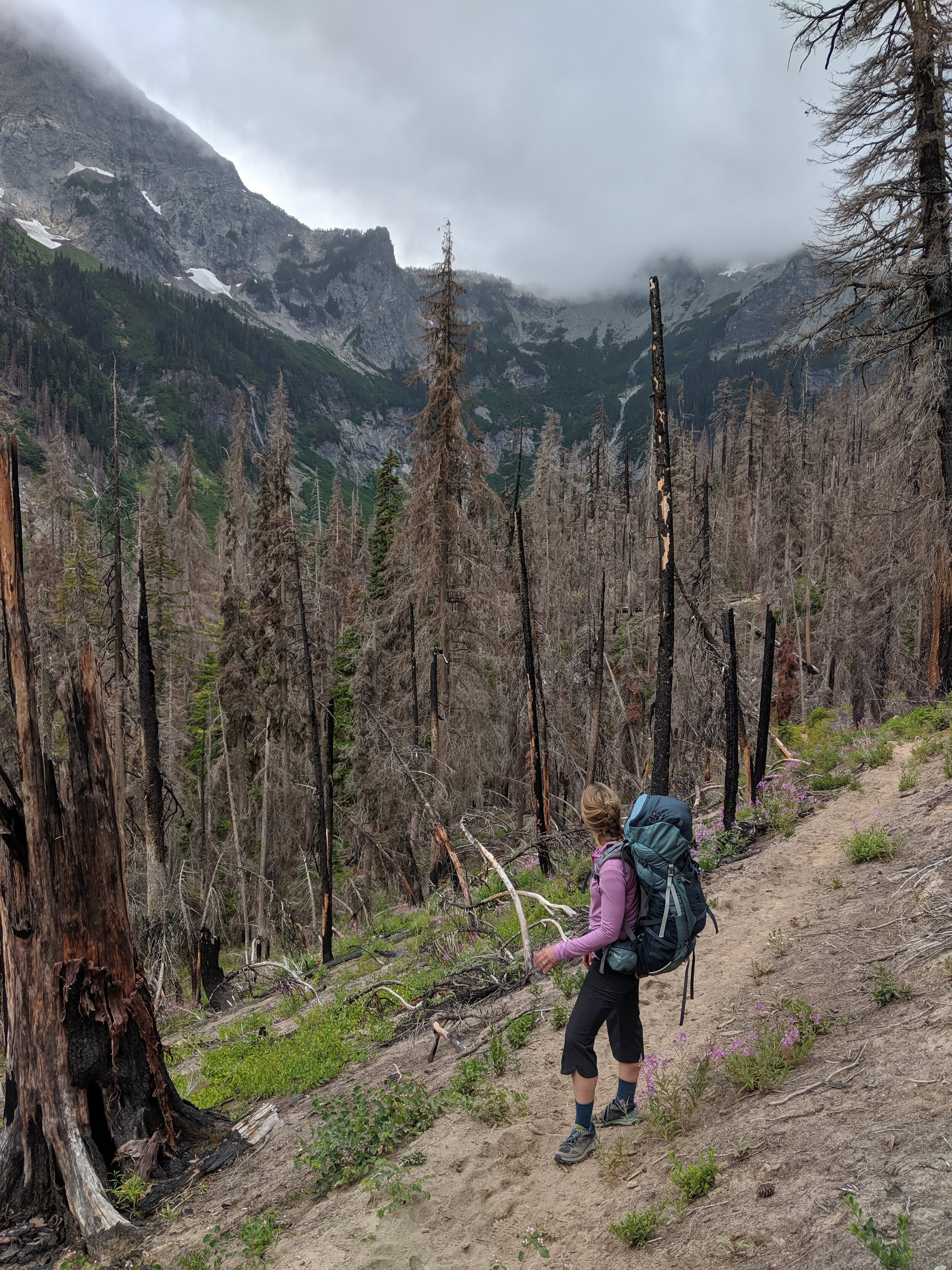 The first switchbacks were in a burnt-out portion of the forest. We were fortunate to have a cool, overcast day to tackle them.