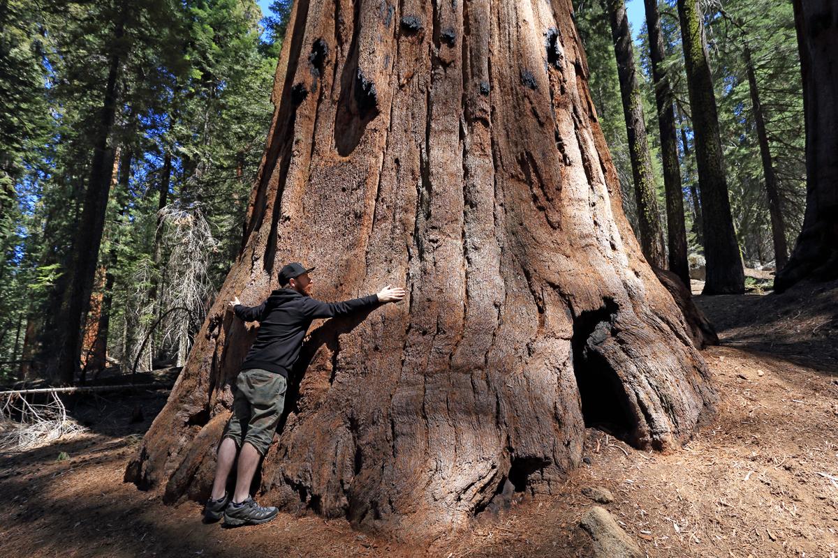 RZSequoia2.jpg