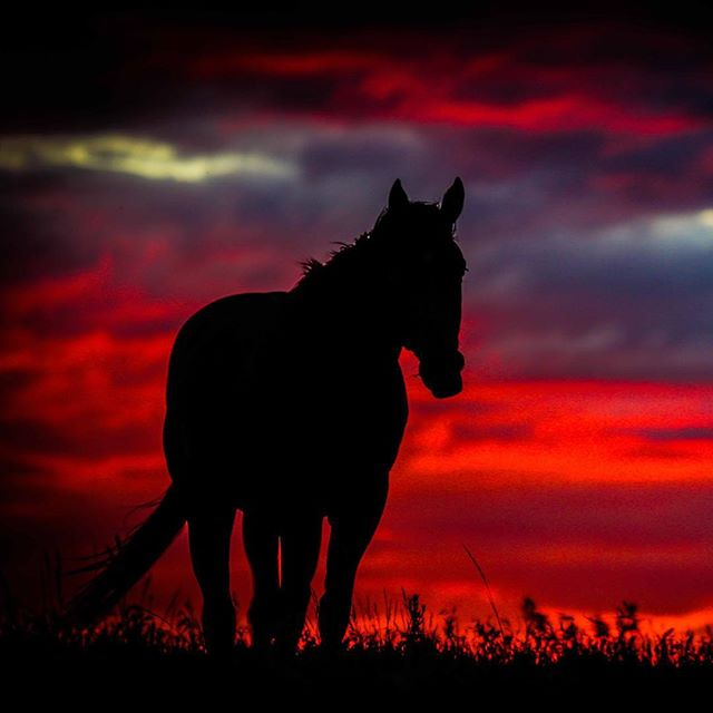 #horizon #horse #montana