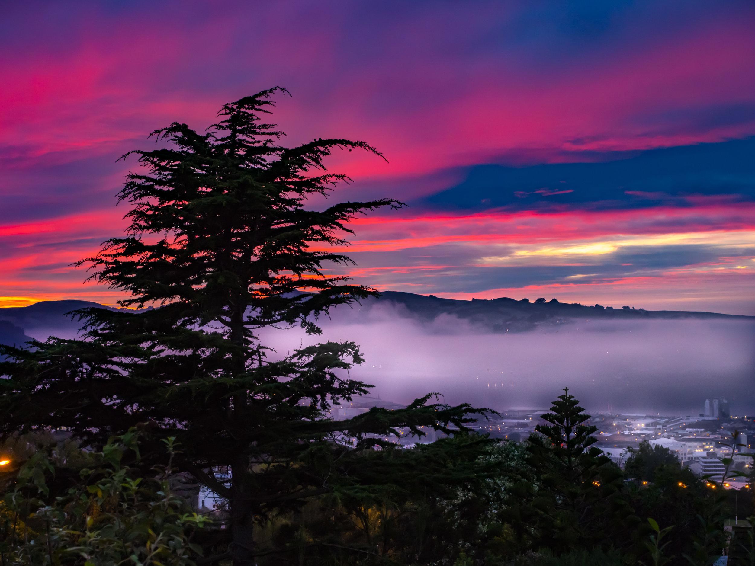 Dunedin tree with sunset