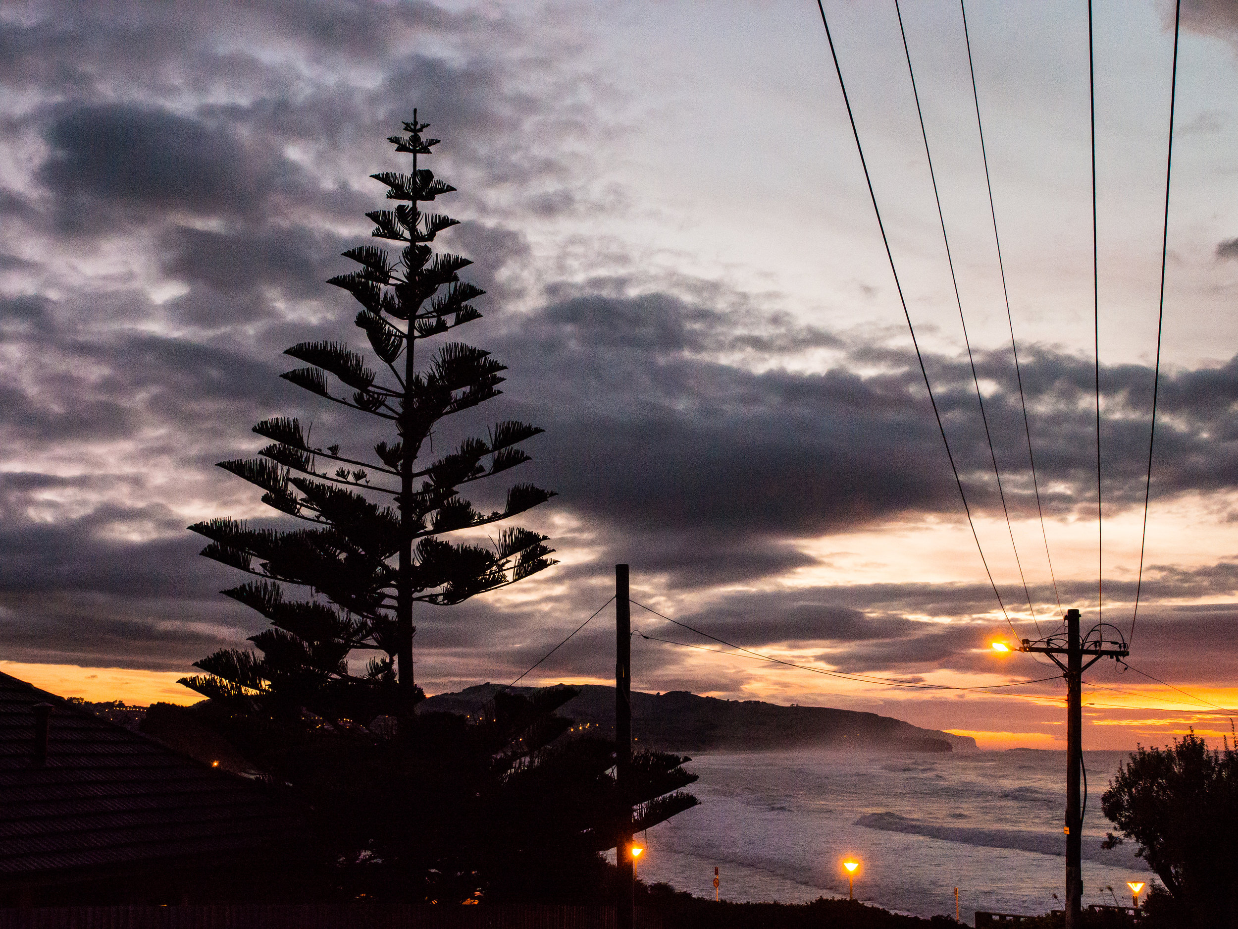 Norfolk pine at dusk St Clair Dunedin