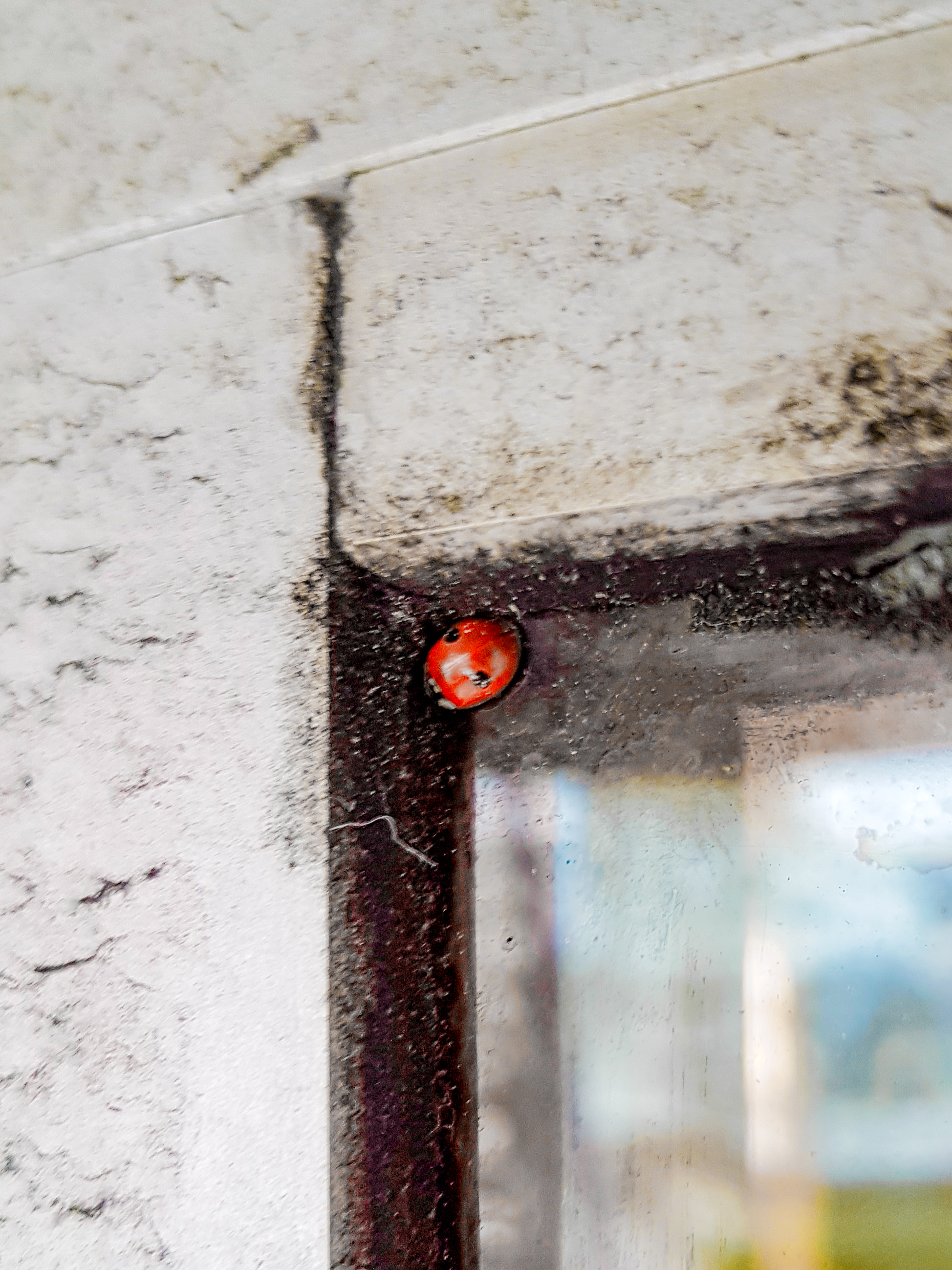 Signing off.....  - with this little ladybug snapped residing in the corner of an exterior window 7 floors high while Nick was abseiling last week.  Bye for now.