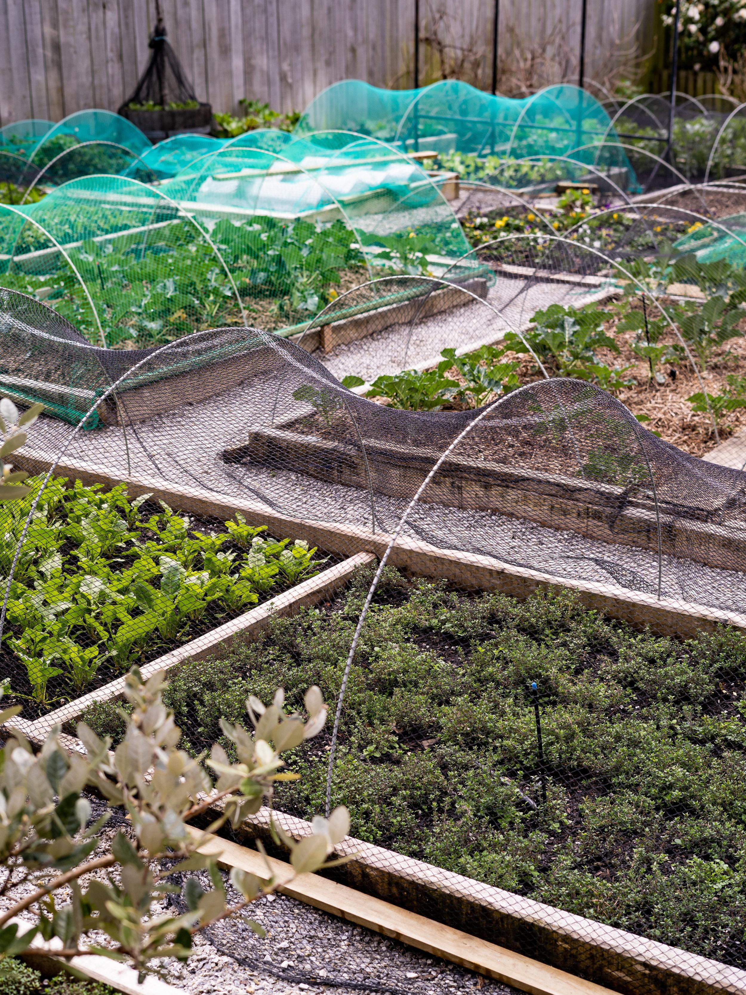 No7 Balmac Organic Kitchen Garden Flourishing 04.09.18