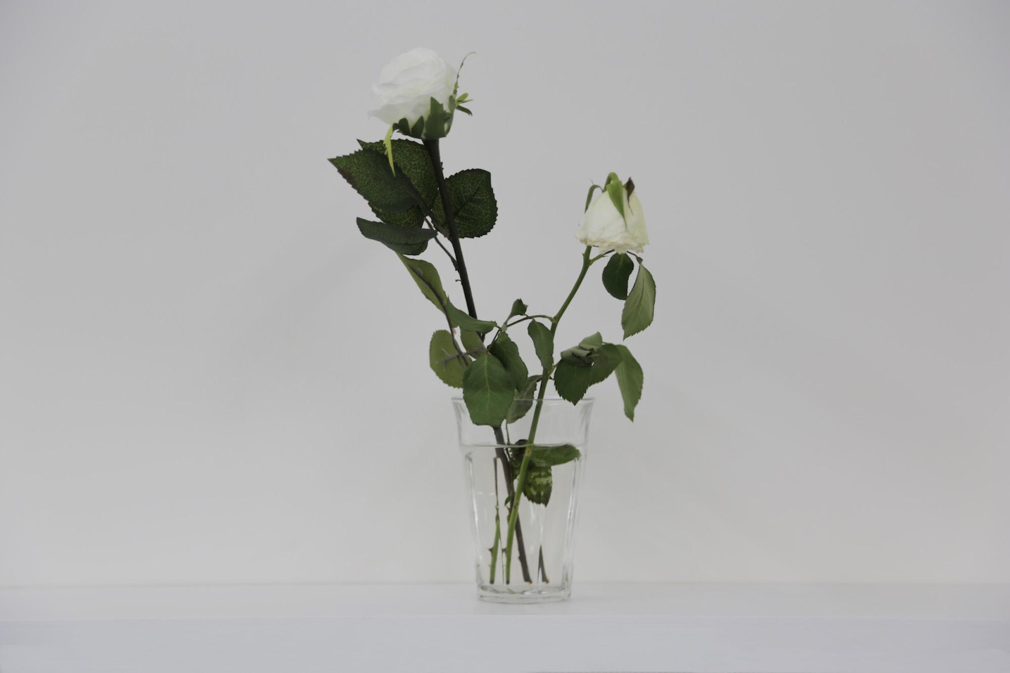 Stéphanie Saadé  Faux-jumeaux 2014 Natural white rose, artificial white rose, vase 15 x 30 cm