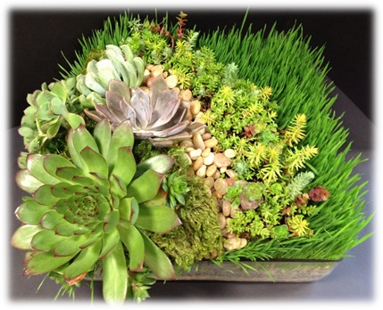 Custom - wheatgrass succulents.jpg