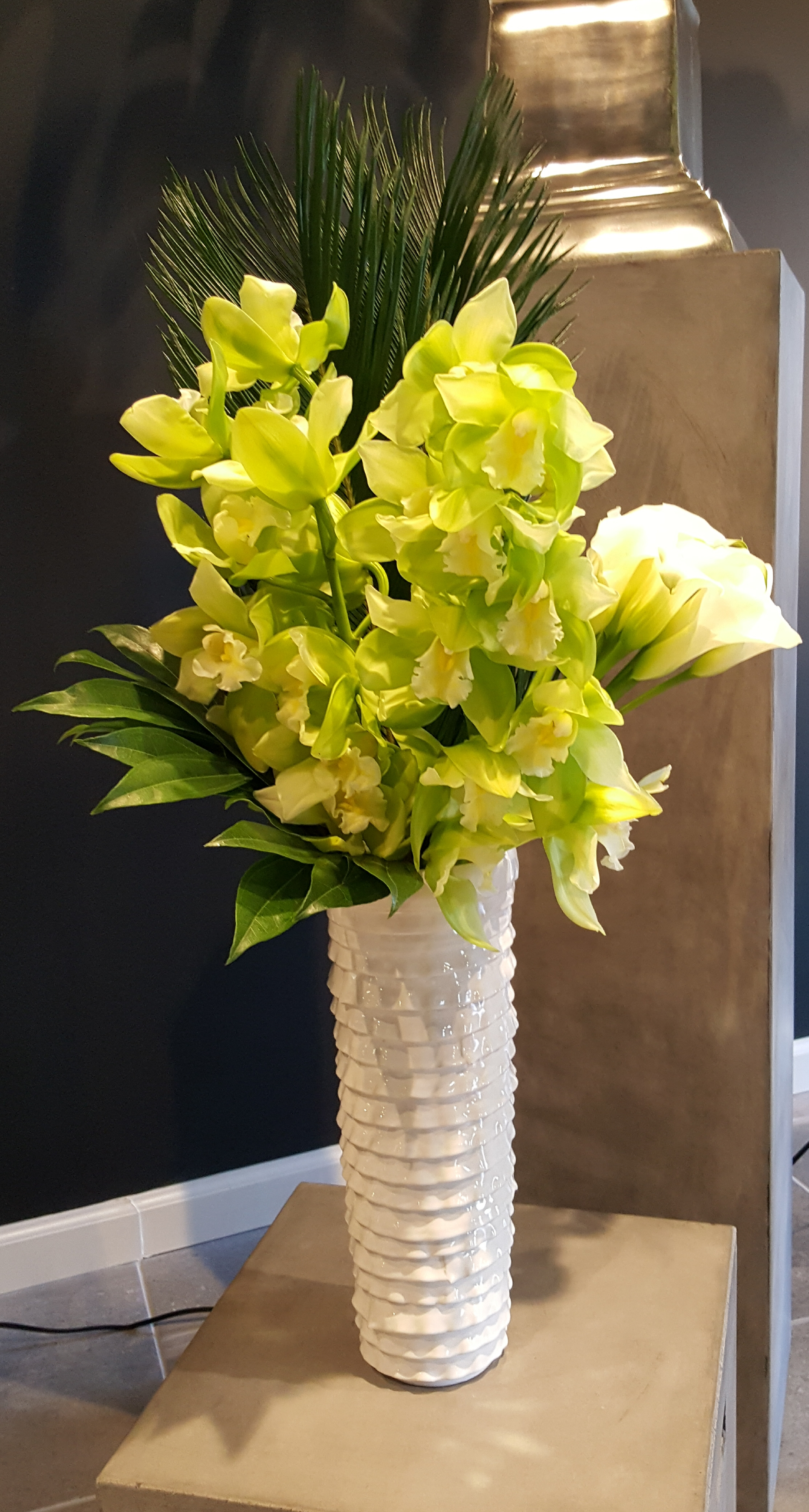 Cymbidium Orchids Callas Tall Signature Collection_.jpg