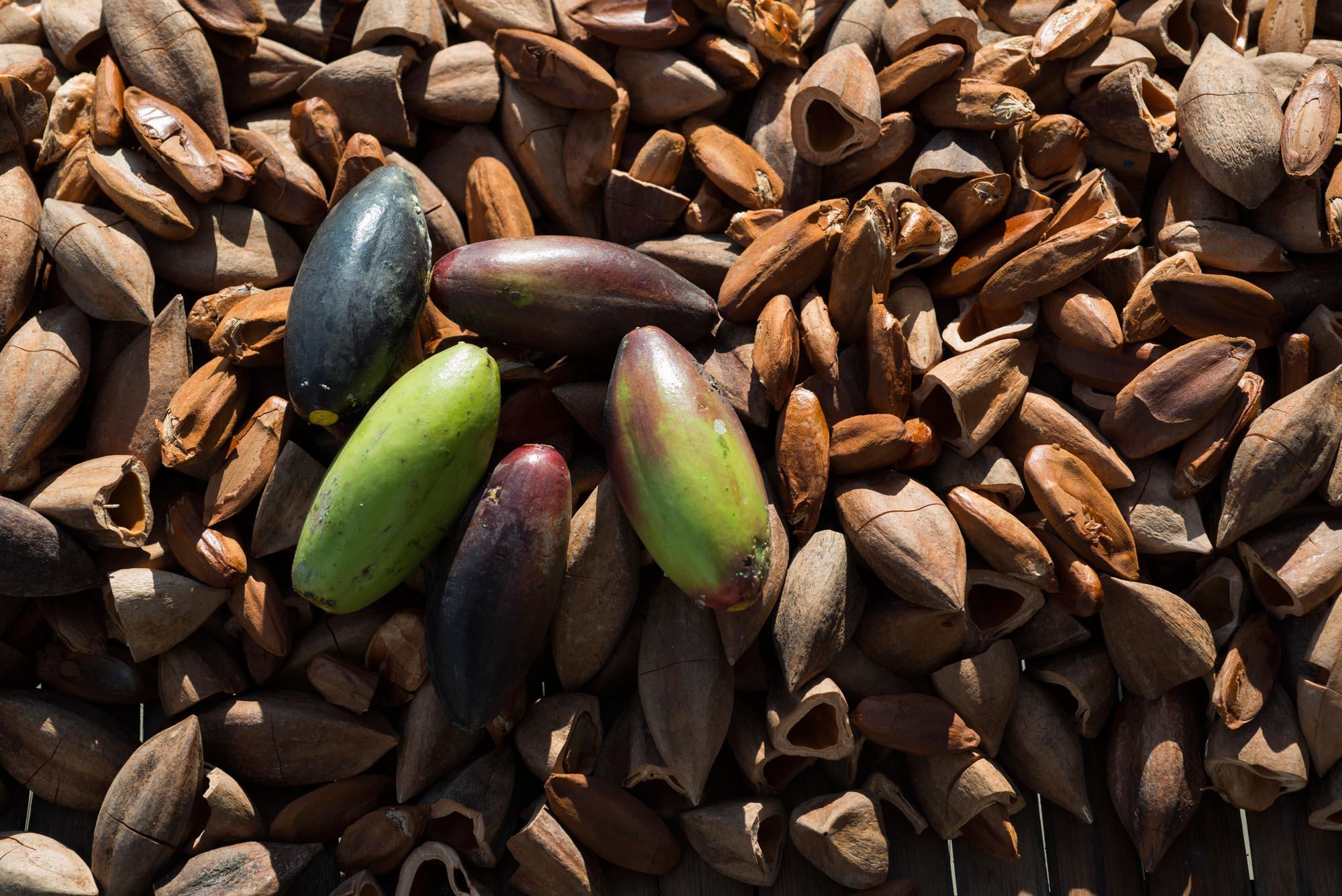 Mixed Pili Nuts///Mélange de noix et de fruits du pili