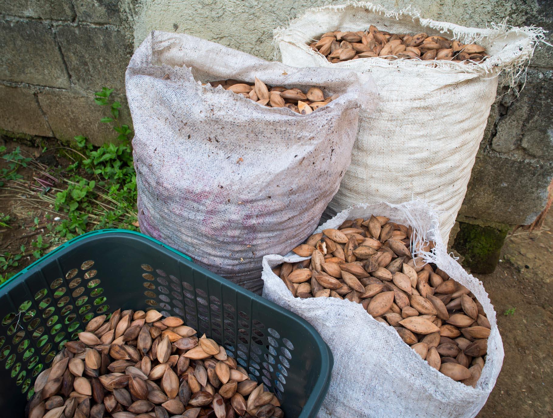 Mount Mayon Organic Pili Nuts in bags///Noix de pili du Mont Mayon issues de l'agriculture biologique, ensachées