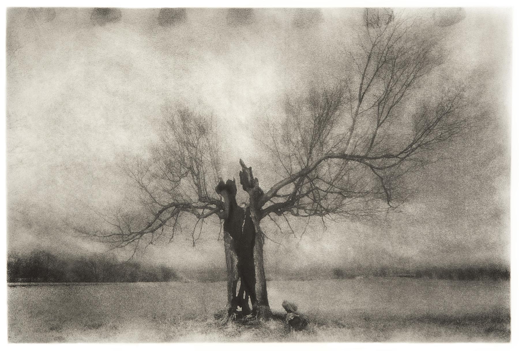 Tree of Life - 2013