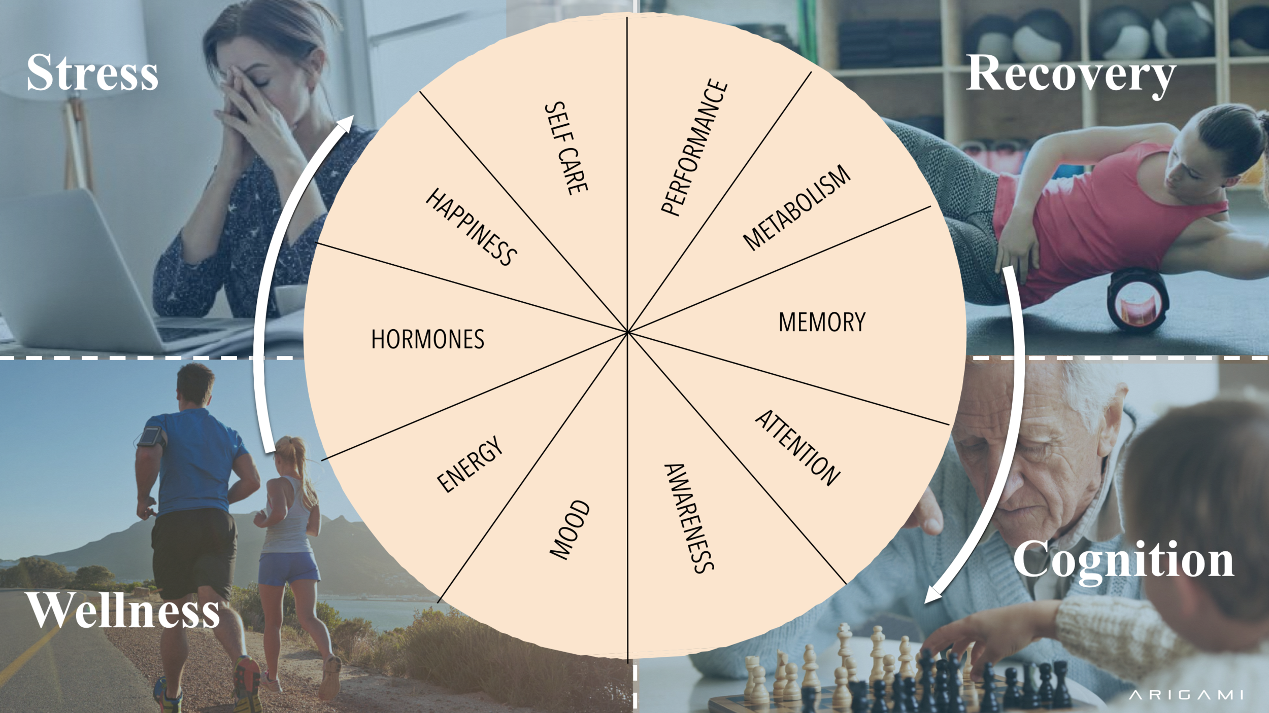 Arigami Multisensory Research Wheel.png