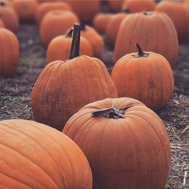 🎃Pumpkin Season🎃⁠ Fun fact: Pumpkins are loaded with nutrients that are great for your skin. For one, it's high in carotenoids like beta-carotene. Consuming foods rich in beta-carotene may reduce the risk of developing certain types of cancer, offer protection against asthma and heart disease and delay ageing and body degeneration.