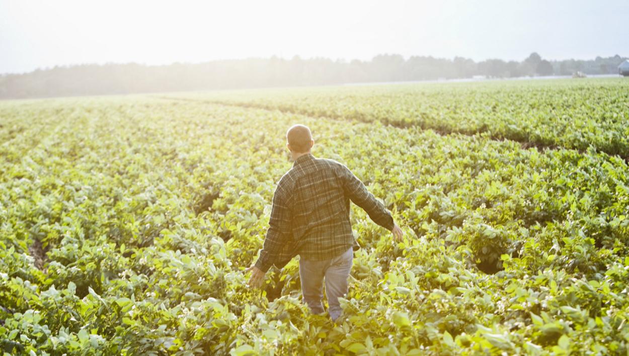 News_0004_agriculture-farming-hero-2-1200x550.jpg.jpg
