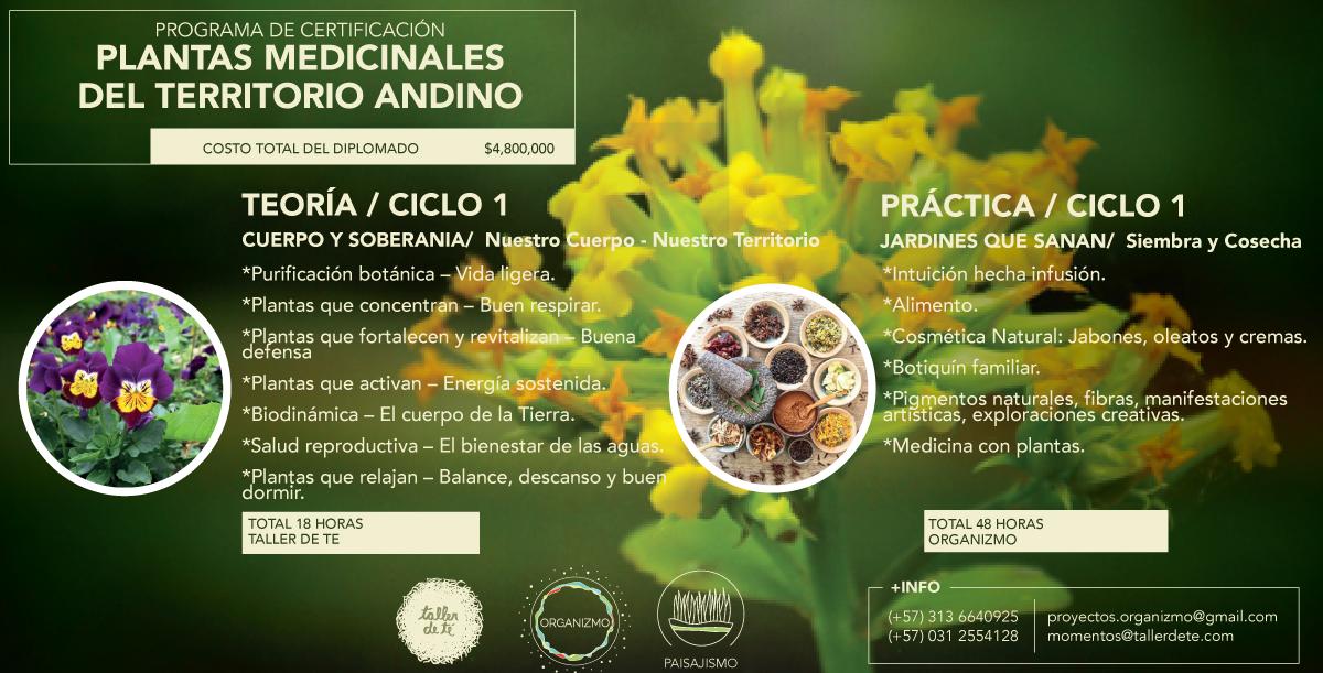 PLANTAS-MEDICINALES1.png