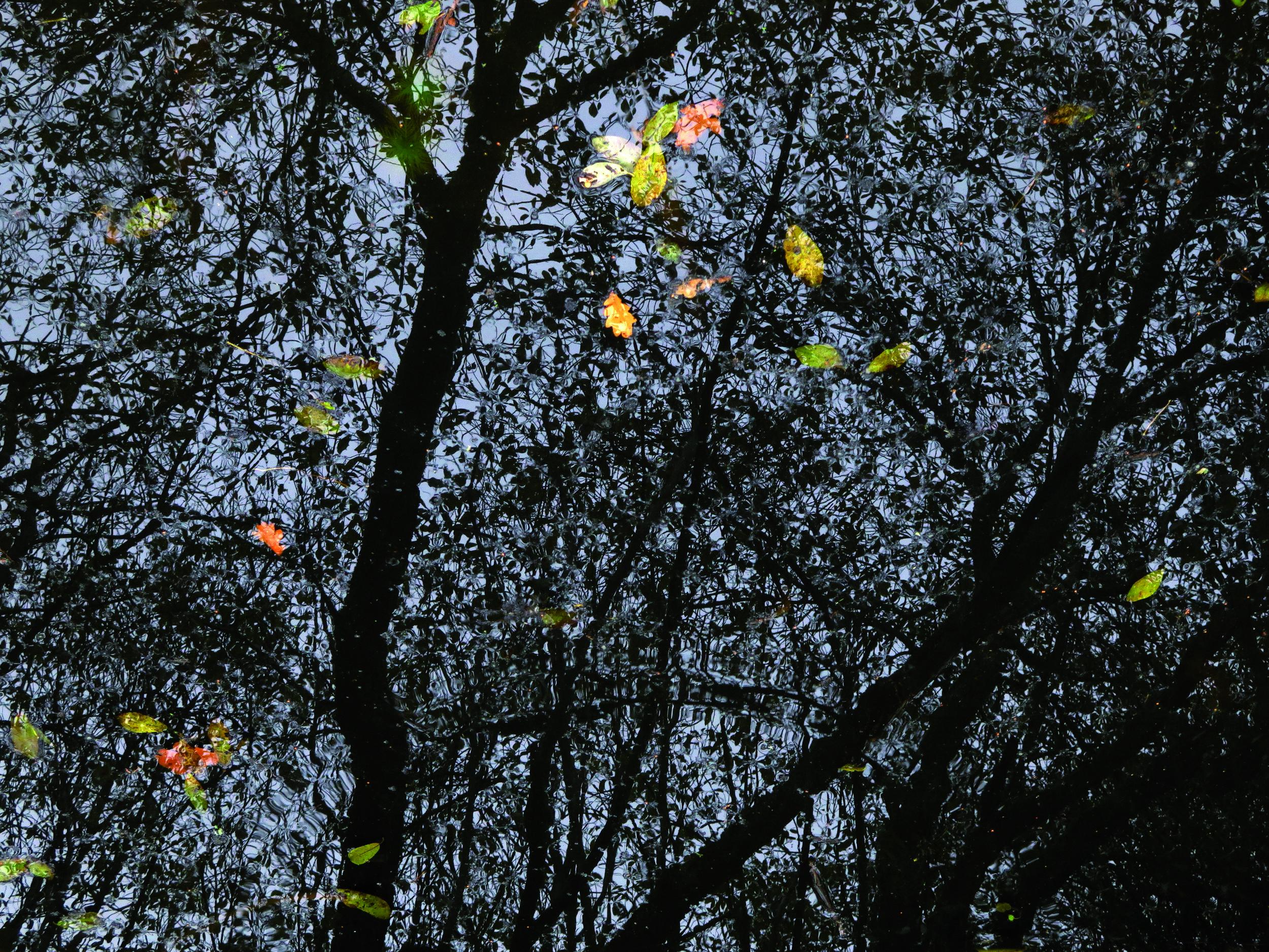 Hoofdstuk 8 - Kathleen Ramboer_arbres6_cmyk_hogeres.jpg