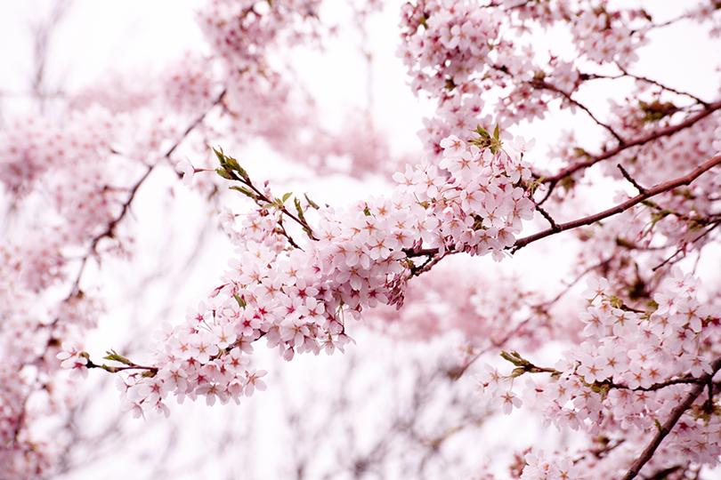 blossom-novel-Anna-Roberts-Photography2.jpg