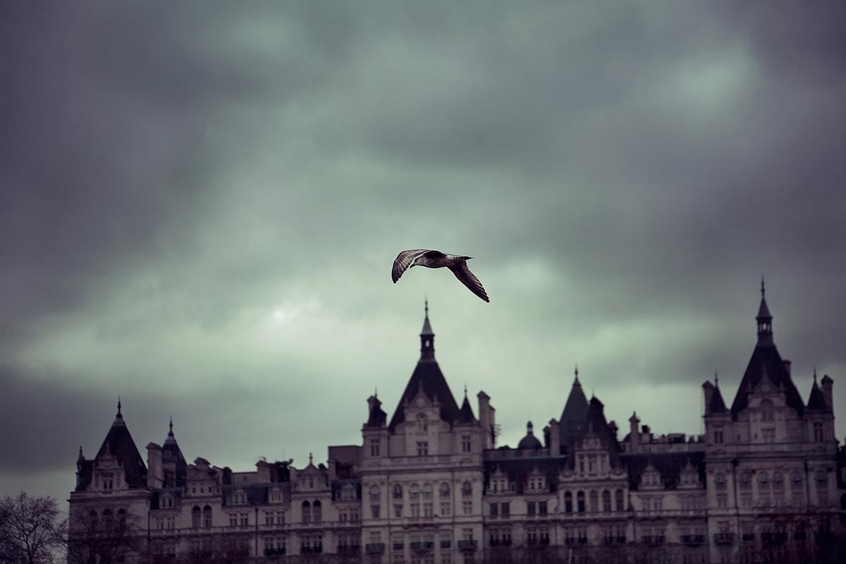 bird-in-the-sky-Anna-Roberts-Photography-3.jpg