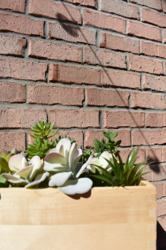 succulents in a wooden crate against brick on a sunny dayJPG