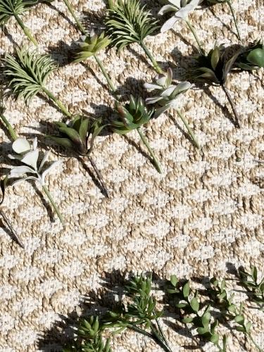 succulents on a jute rug.jpeg