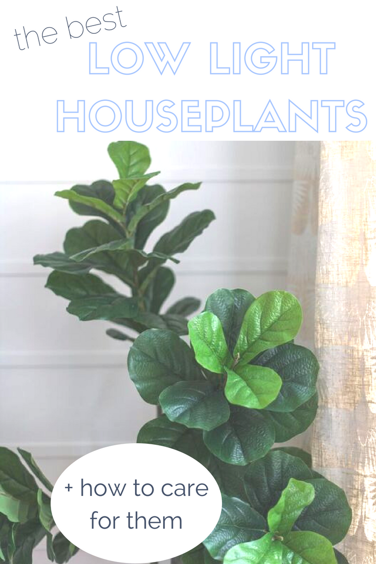 LOW LIGHT HOUSE PLANT CARE.jpeg