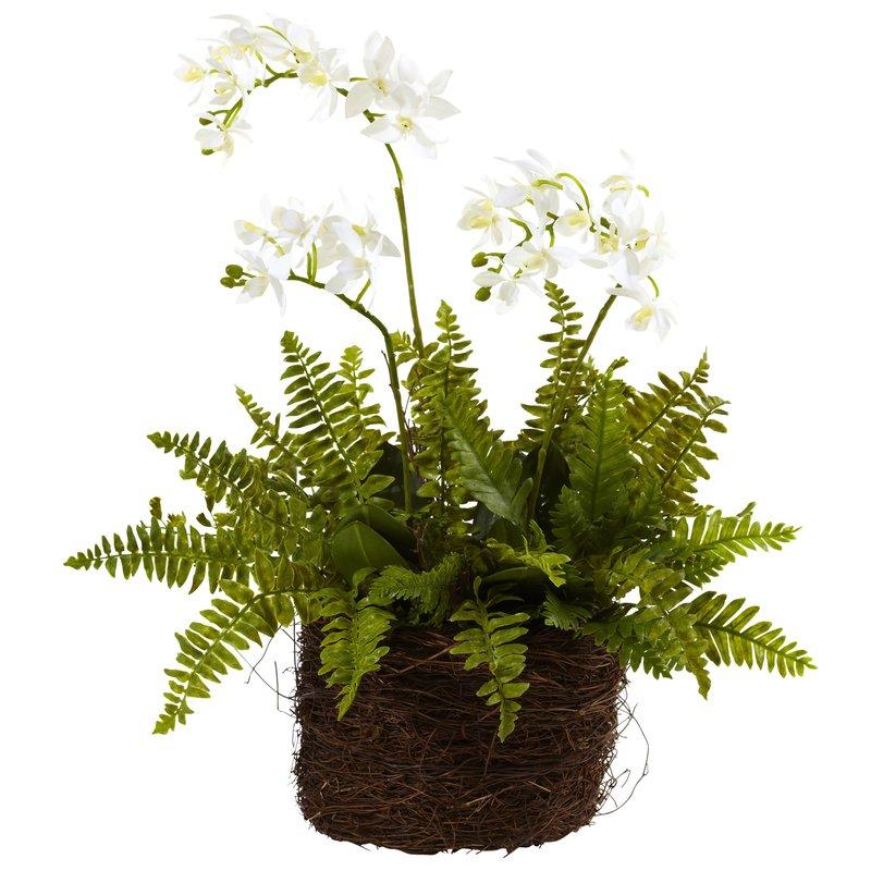 Mini+Phalaenopsis+and+Fern+with+Bridsnest+Planter.jpg