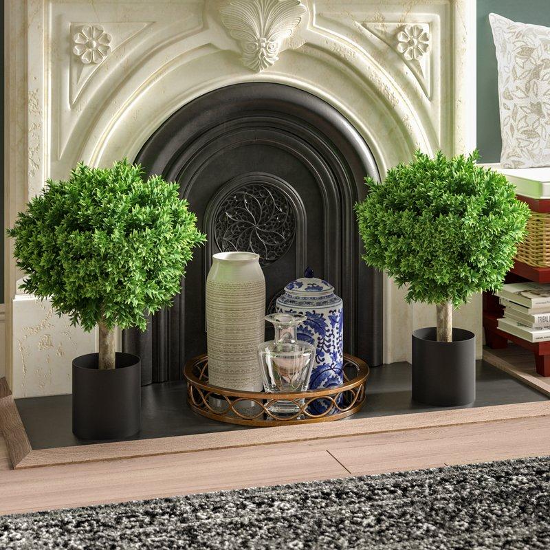 Hedyotis+Topiary+in+Pot.jpg