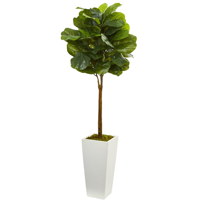 4%27+Fiddle+Leaf+Boxwood+Topiary+in+Tower+Planter.jpg