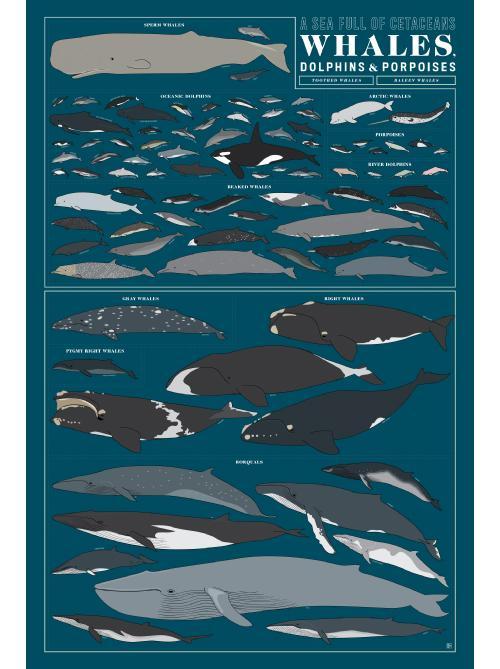 P3-Whales_Img-A_1024x1024.jpg