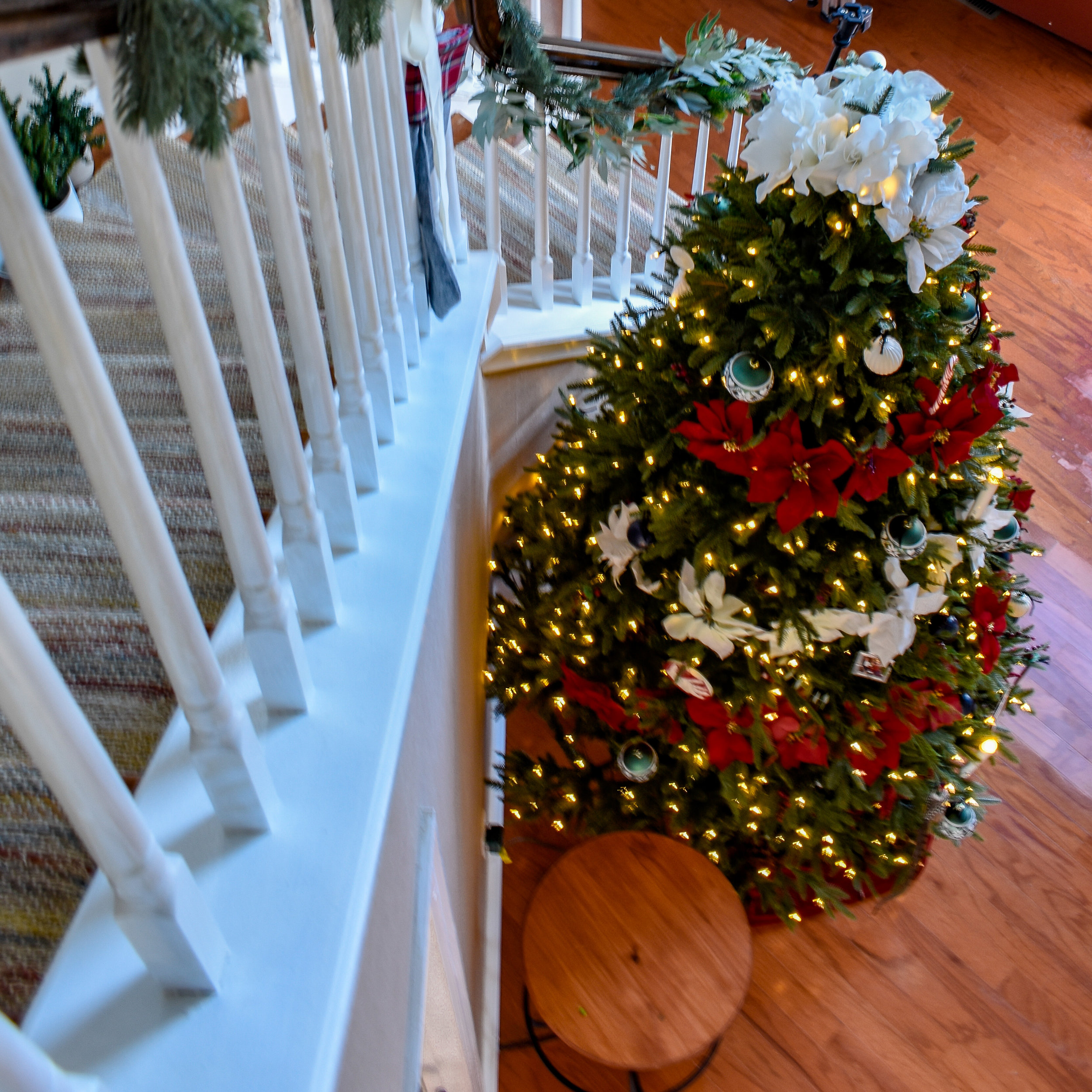 traditional christmas decor: in the foyer, we've added a Christmas tree decked out in red and white poinsettias