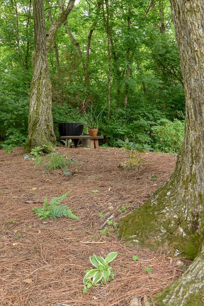 national park-inspired backyard makeover