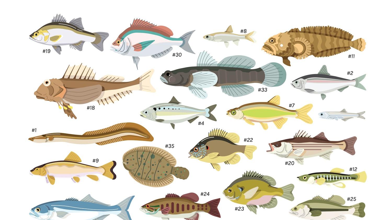 fishcount.jpg