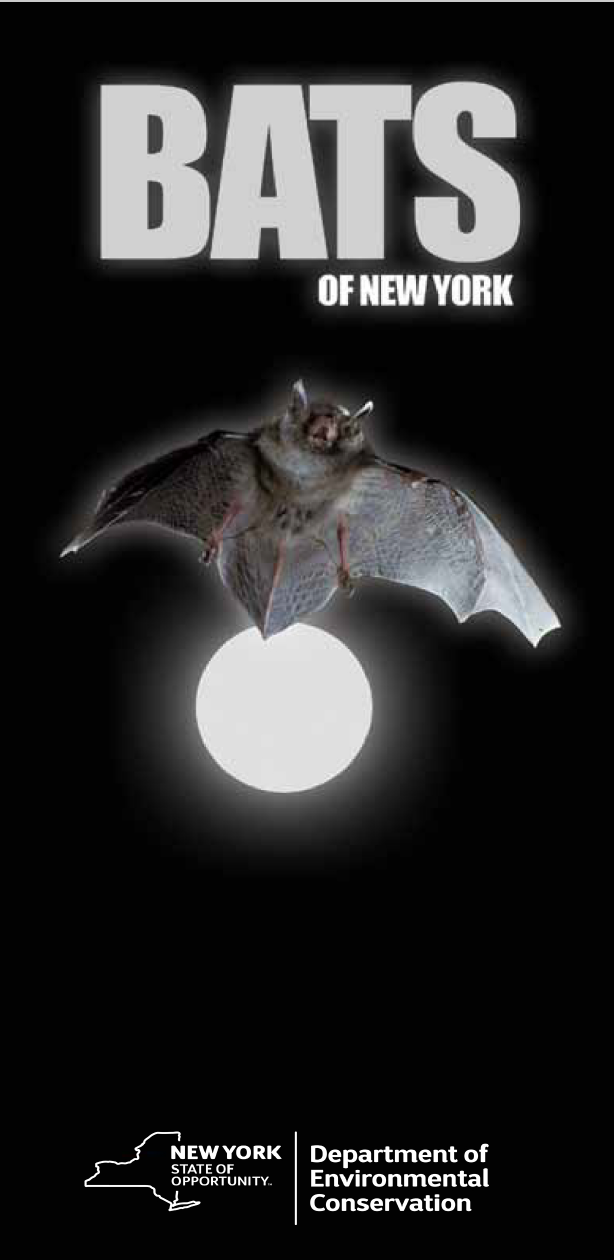 Click for a PDF about the different kind of bats in New York State