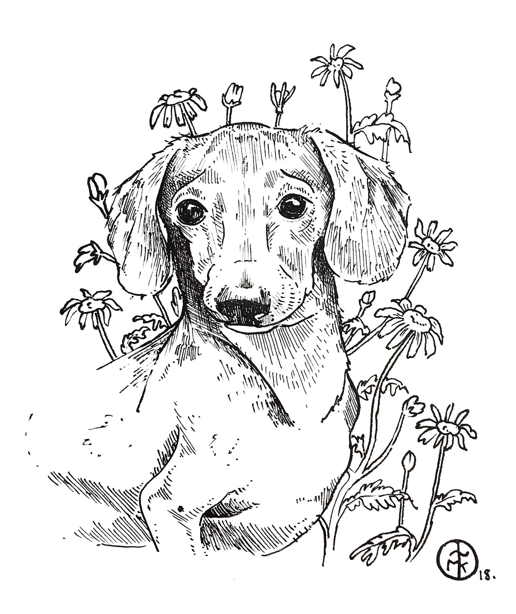 Dog Portrait.jpeg