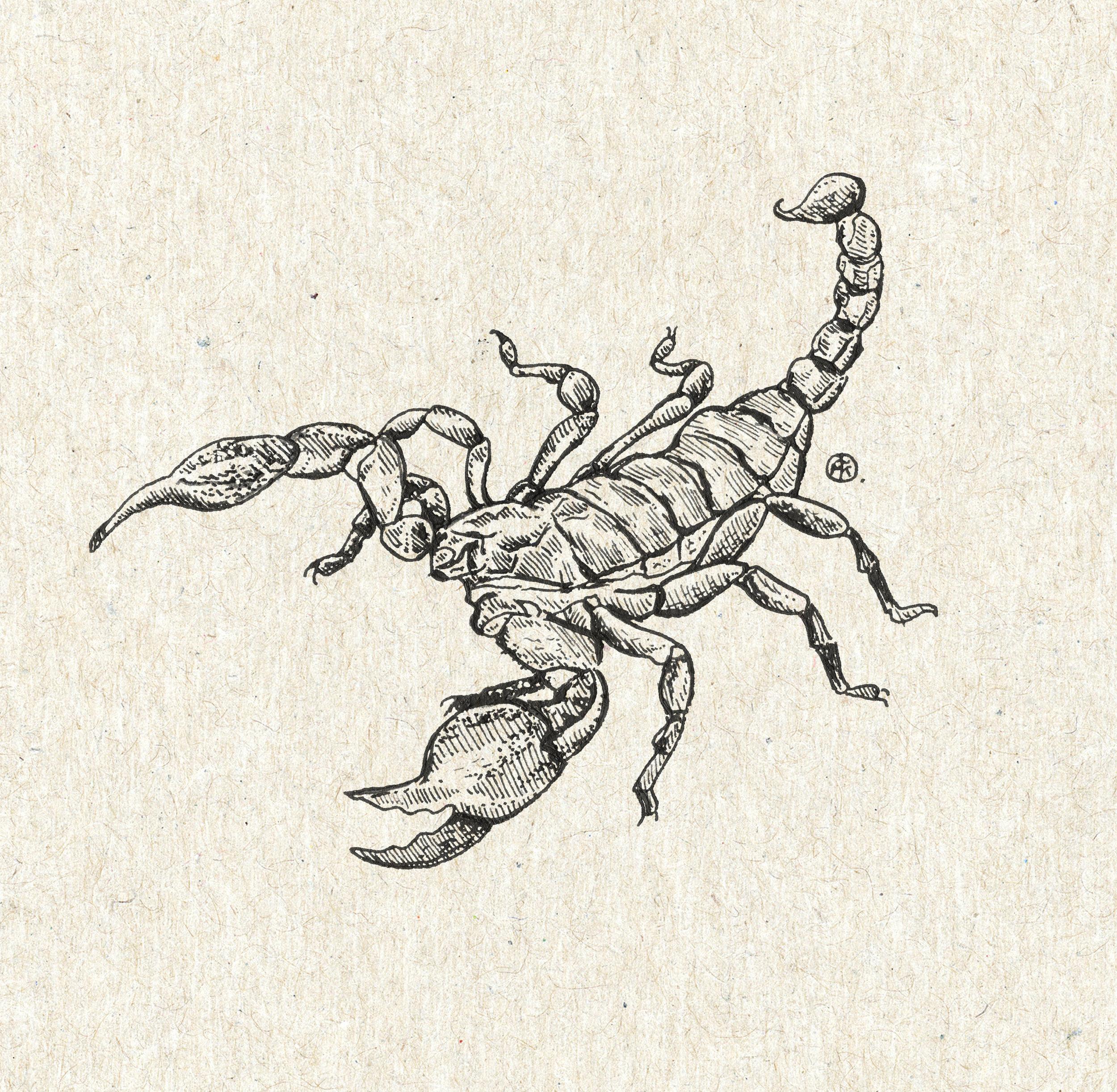 Scorpion smaller.jpg