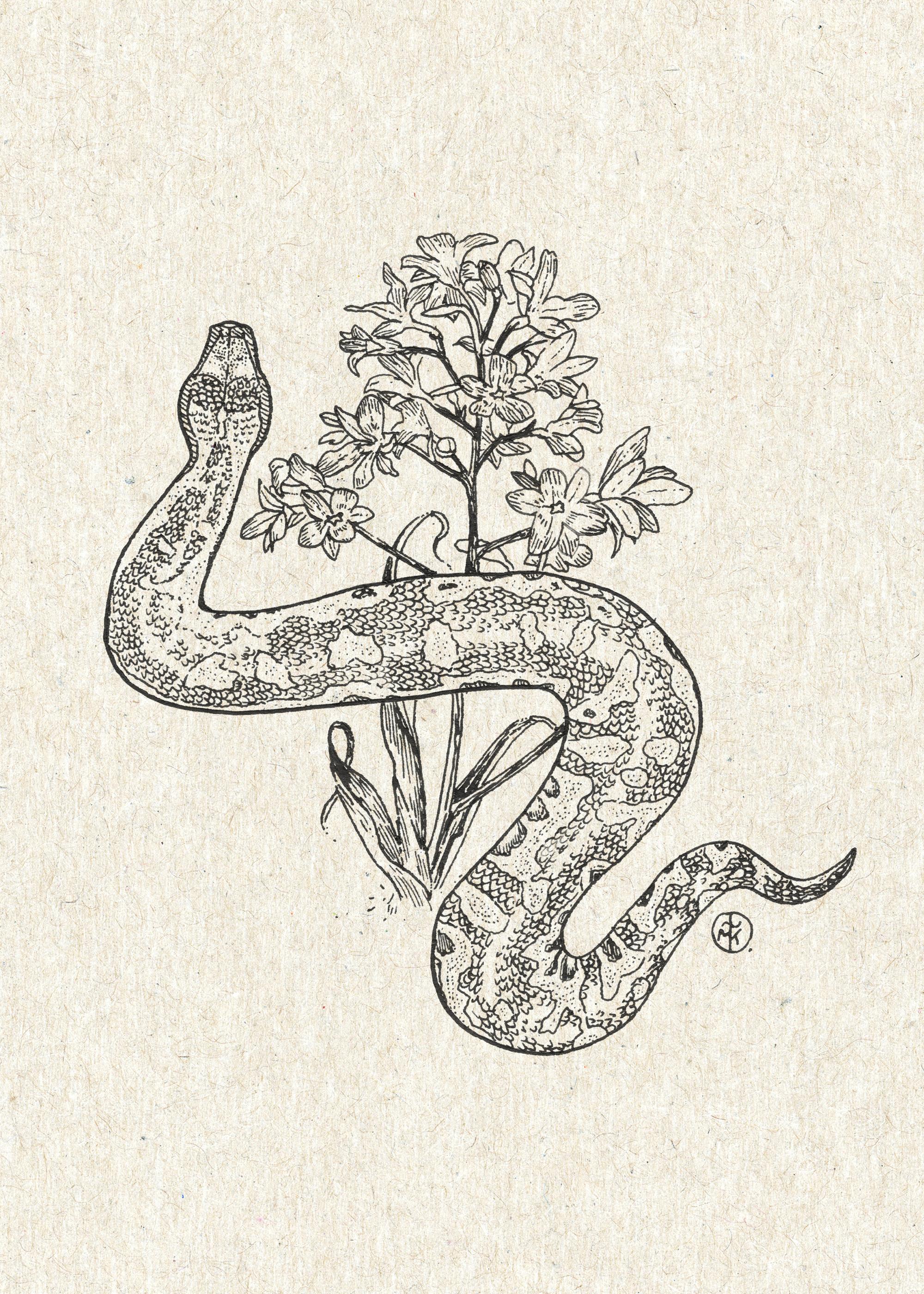 Snake and Desert Flower.jpg