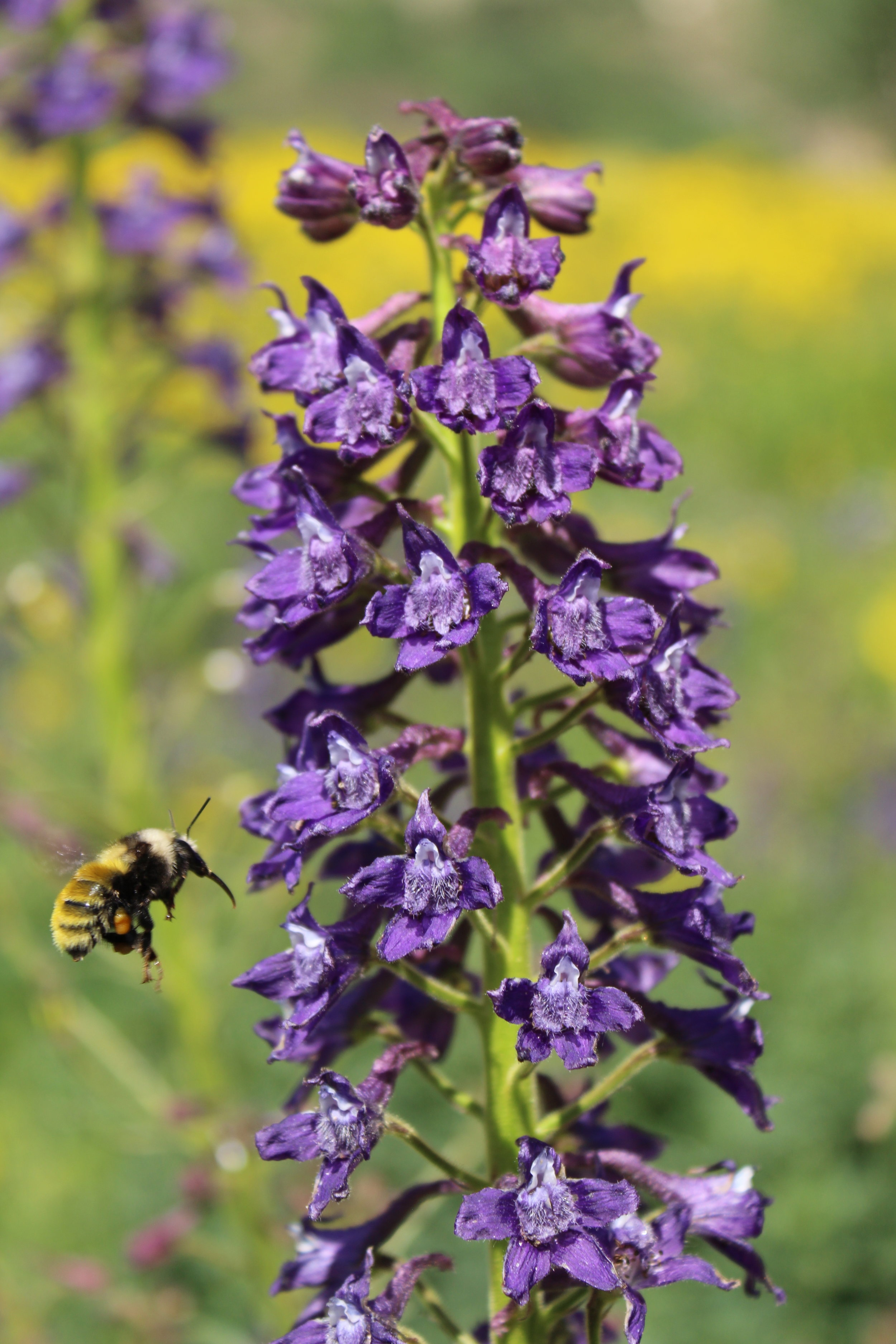 Linking Pollinator Behavior to Plant Reproductive Function -