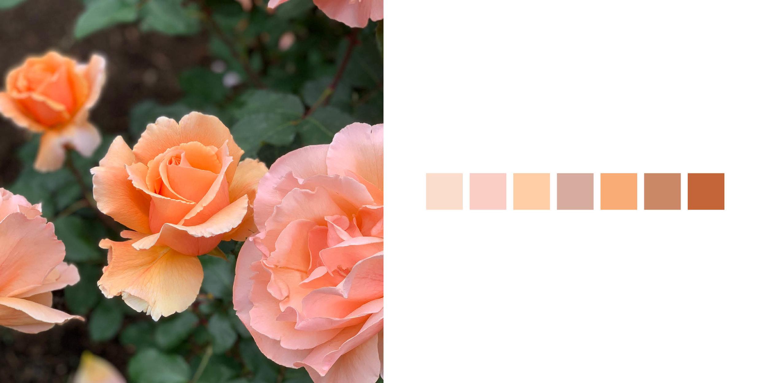 The Rose Book3.jpg