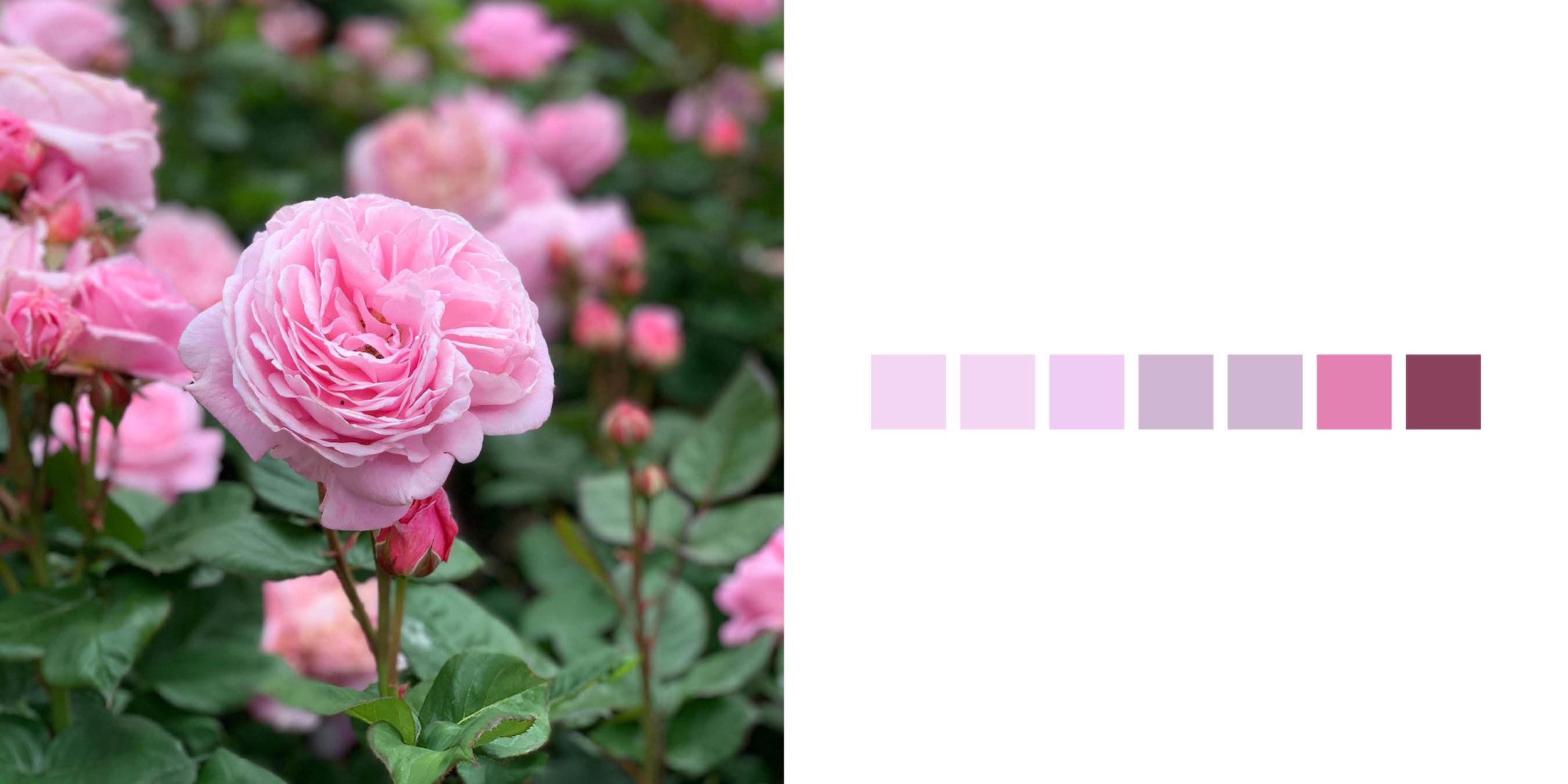 The Rose Book4.jpg