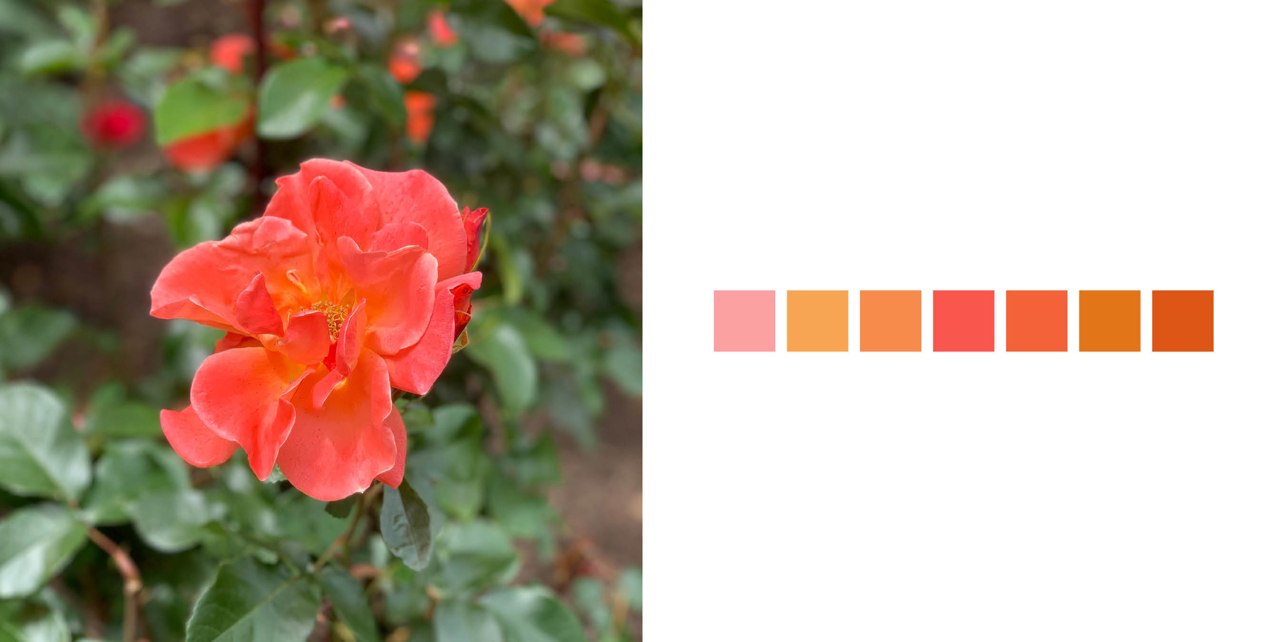 The Rose Book5.jpg