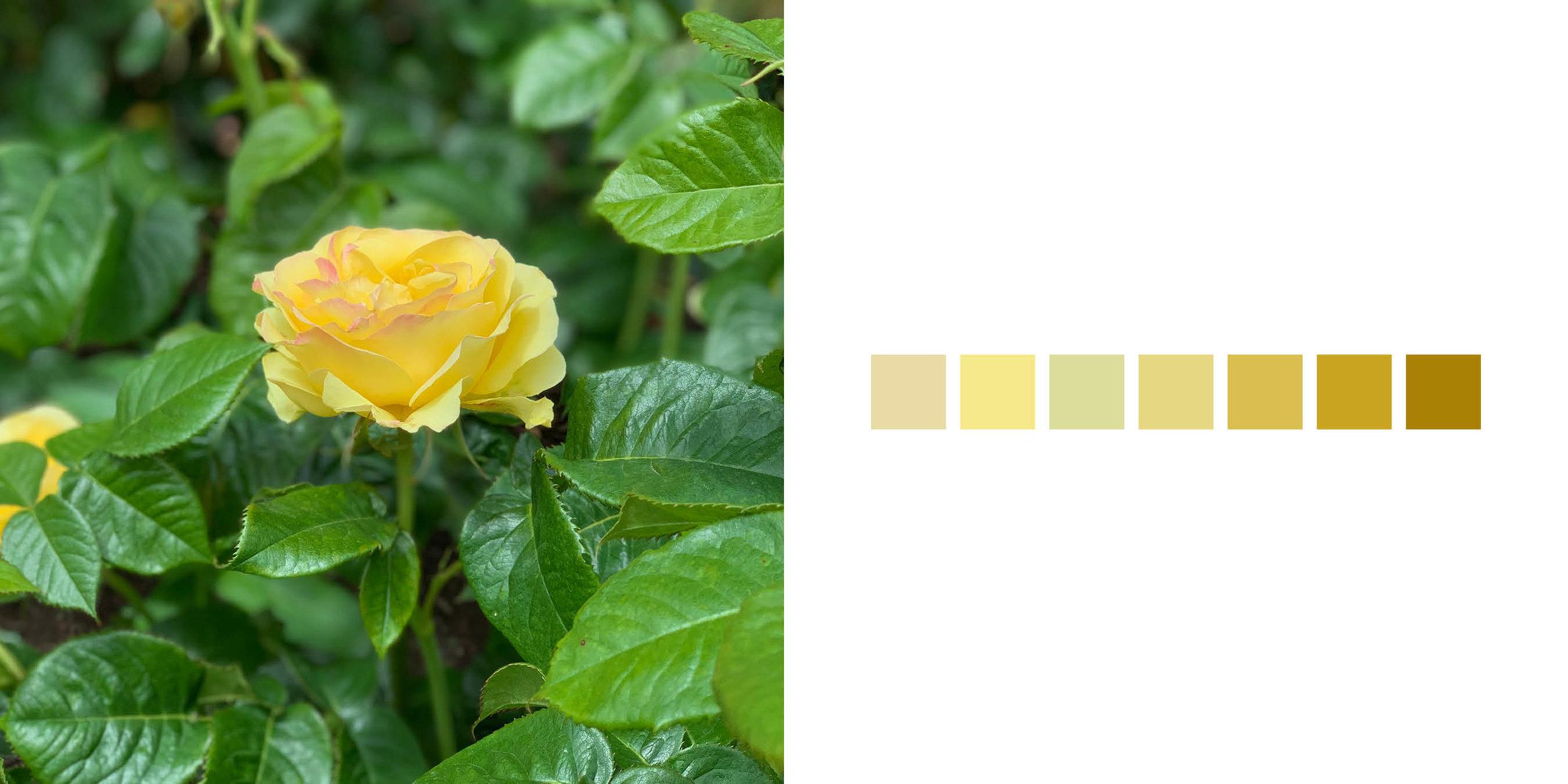 The Rose Book6.jpg
