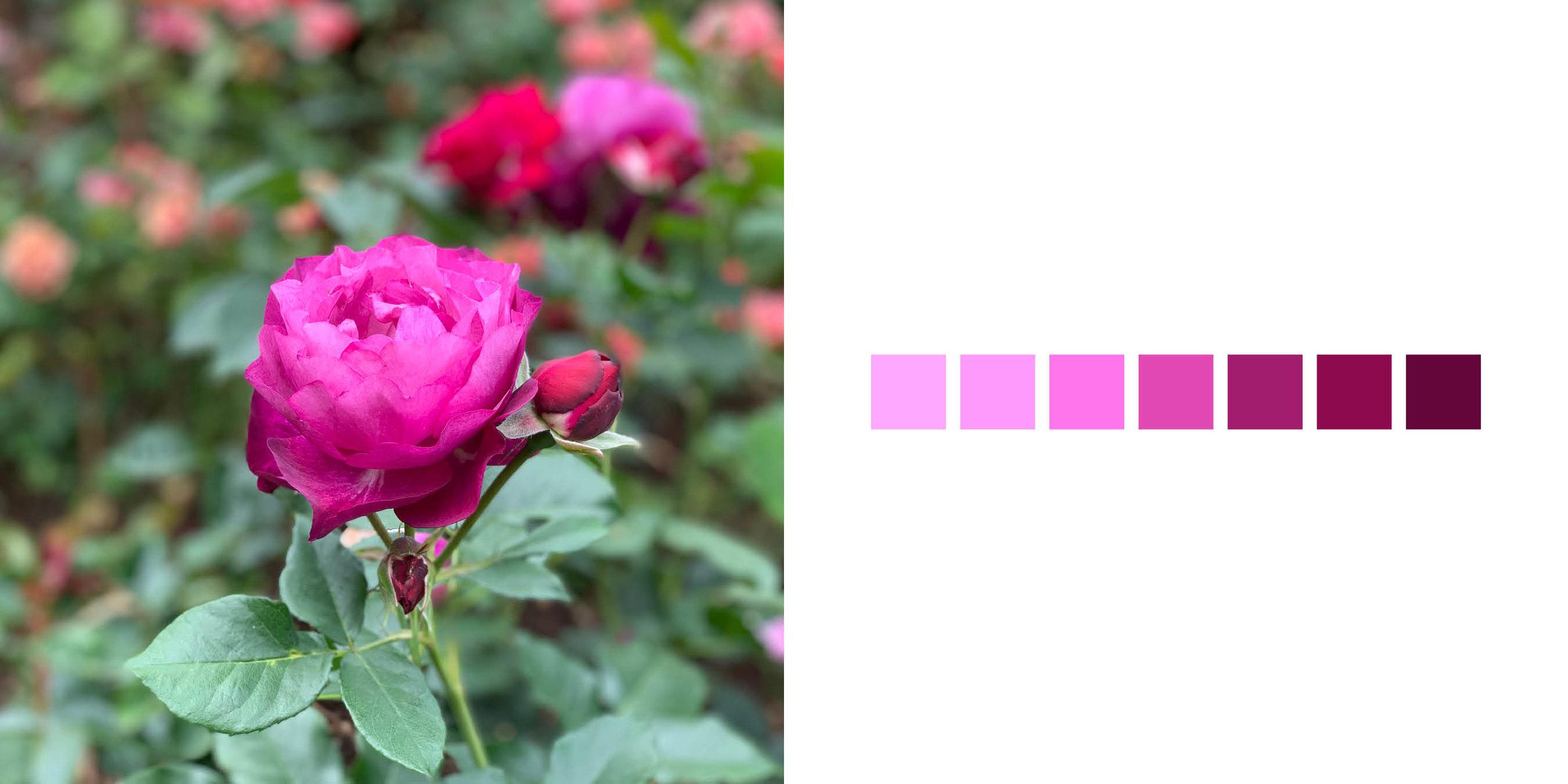 The Rose Book8.jpg