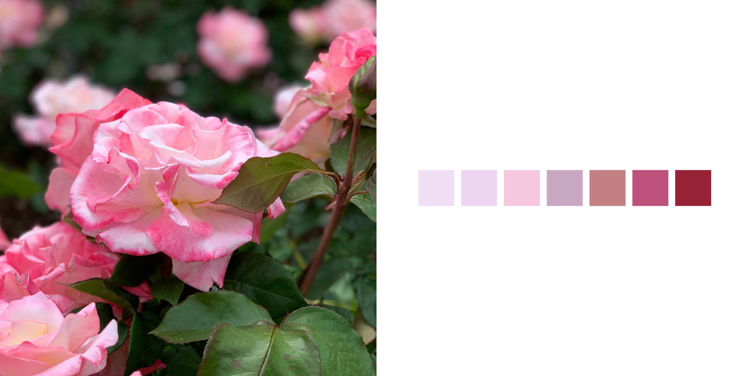 The Rose Book9.jpg