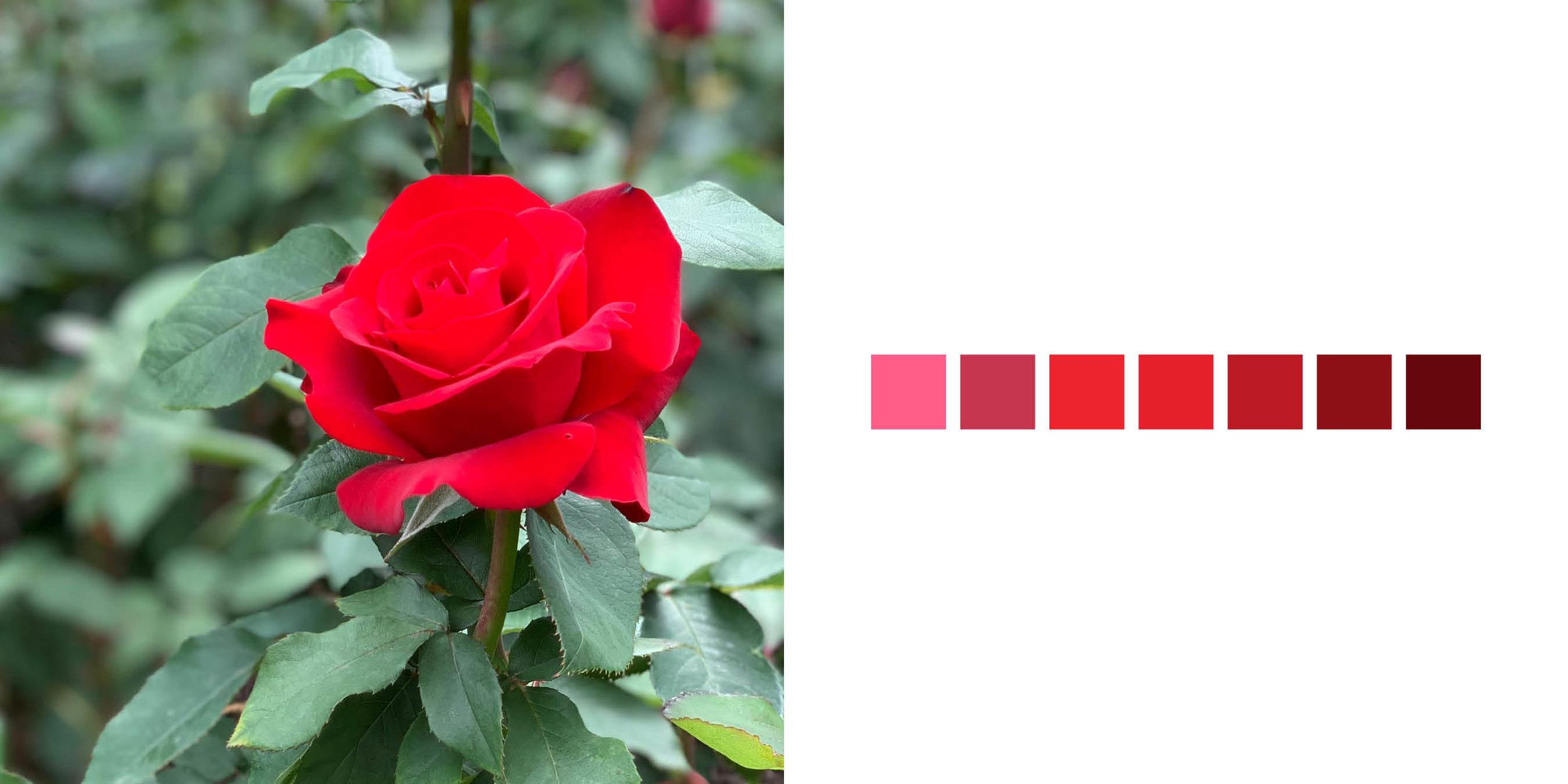 The Rose Book10.jpg
