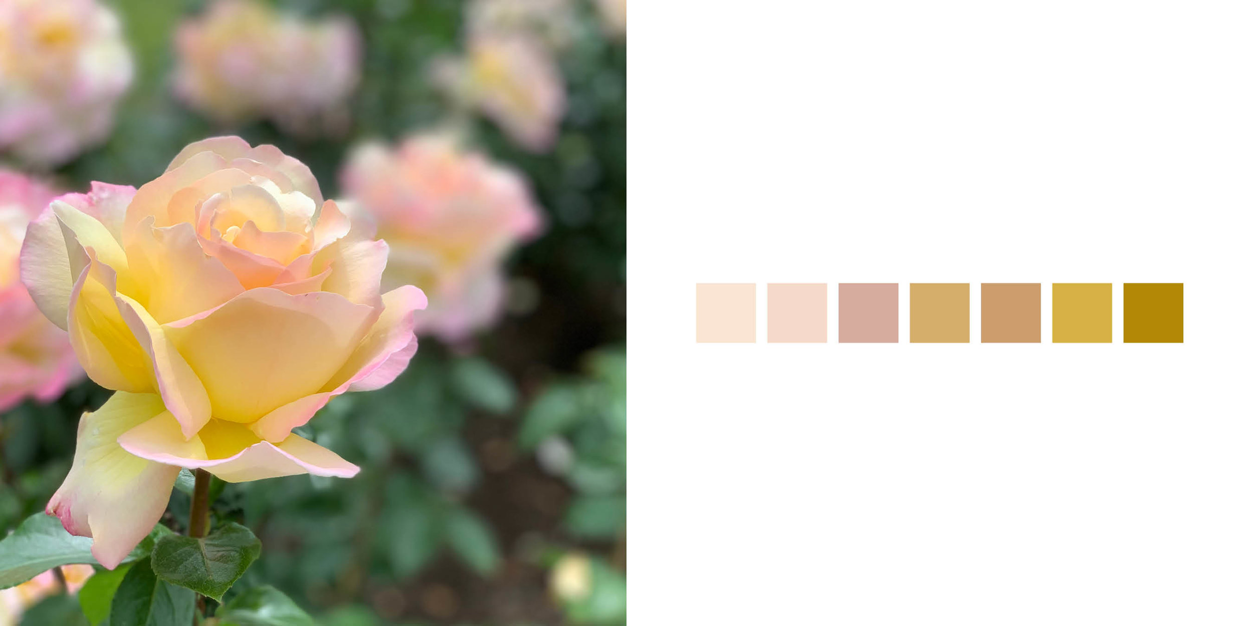 The Rose Book11.jpg