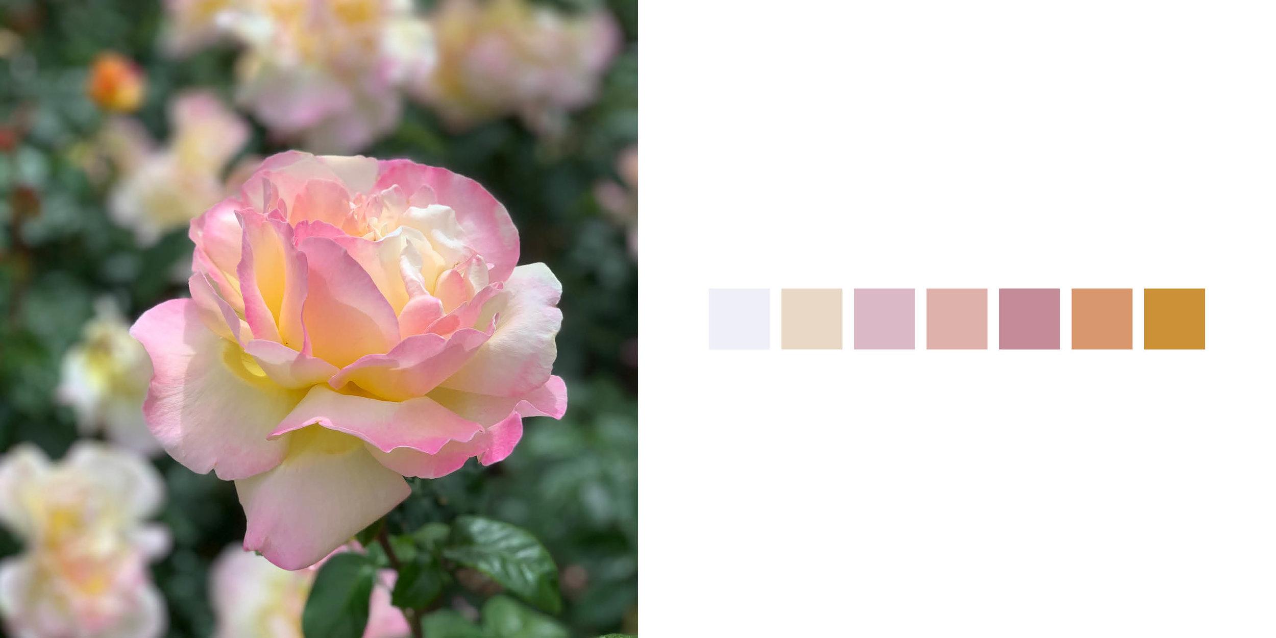 The Rose Book12.jpg