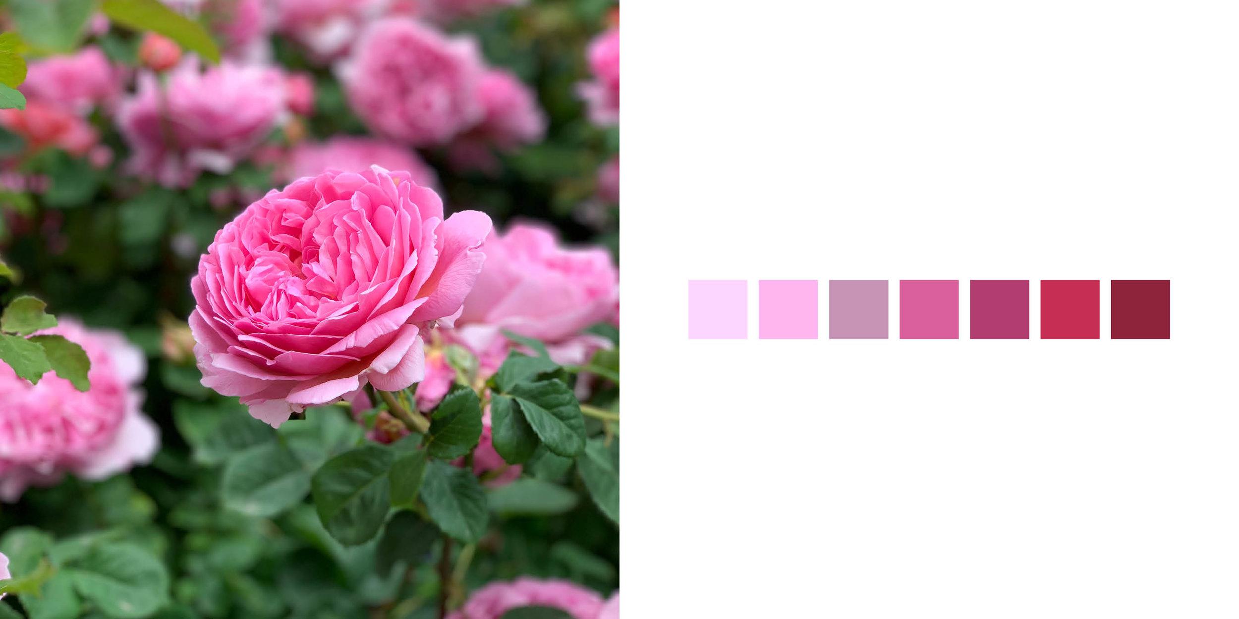 The Rose Book13.jpg